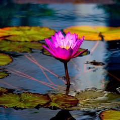 Blütenblätter – Gedichte von Goblin Cotone