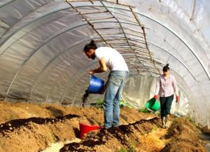 Agrikultur_4