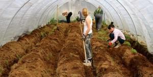 Agrikultur_5