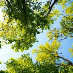 Bäume, Verbündete und Freunde