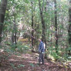 Kastanienernte im Waldtempel