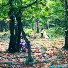 Sonate für einen Kastanienbaum