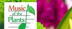 Wie funktioniert die Musik der Pflanzen?
