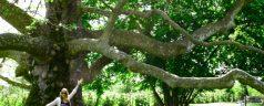 """Was bedeutet es """"Bäume zu orientieren""""?"""