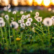 Frühling des Lebens